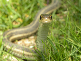 Snake_in_the_grass__surveying_by_android3000-d35zcfu