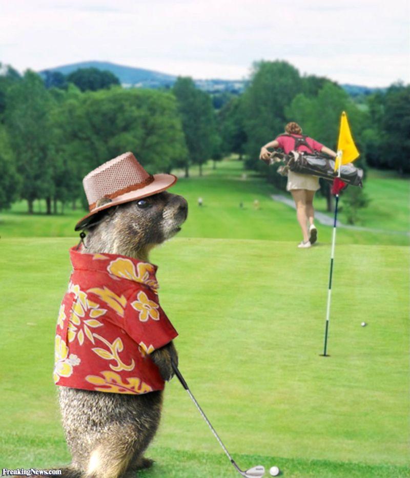 Groundhog-Golfer-37054