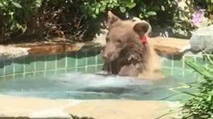 Hot tub bear
